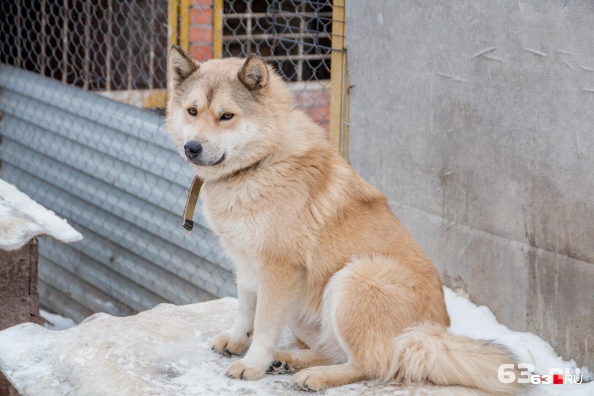 В этом году на отлов беспризорных животных потребуется более 12 миллионов рублей