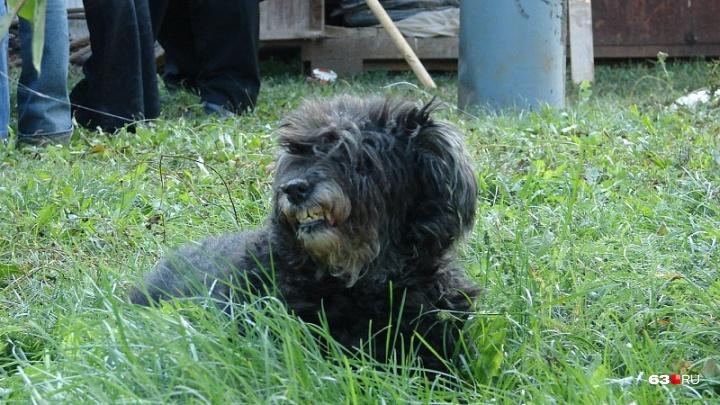 С животными не выезжать: в Самарской области ввели карантин по бешенству