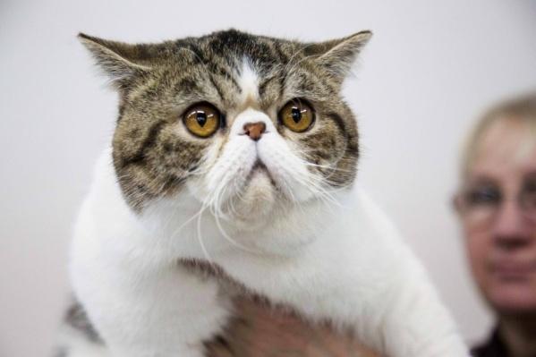 Корм для кошек обходится дешевле, а игрушки — дороже собачьих