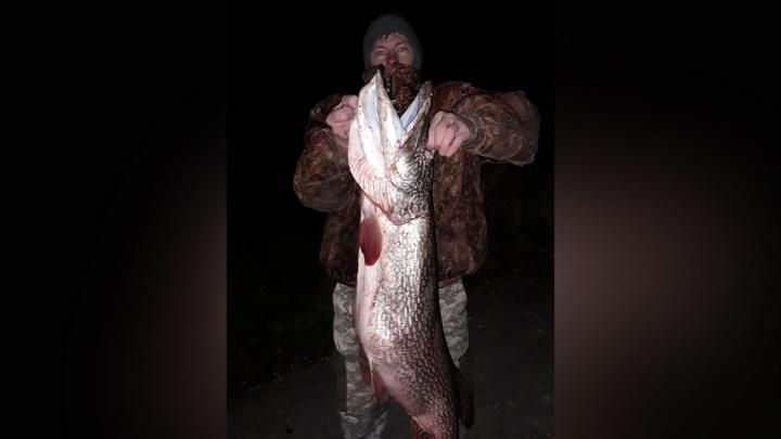 «Перепутал рыбу с бревном»: в Самарской области рыбак поймал щуку весом 11 кг