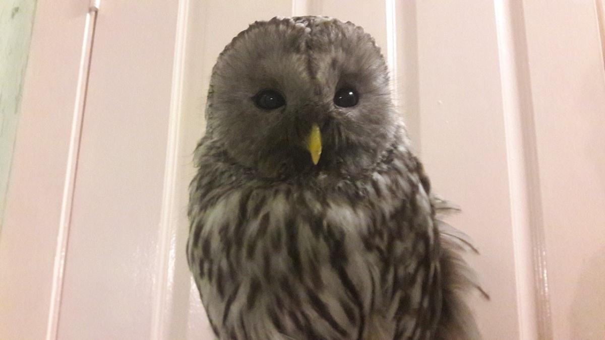 Птицу смогли поймать, когда у нее уже не осталось сил для полёта