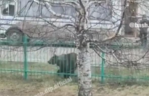 На улице города в Башкирии к забору привязали медведя