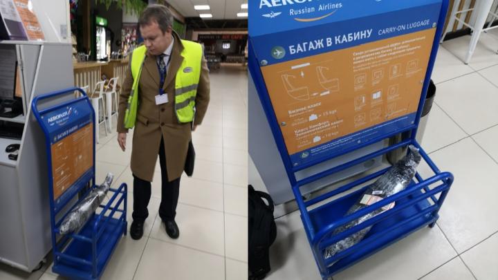 Хвост помешал: в Архангельске члену Общественной палаты РФ запретили брать в салон самолета семгу