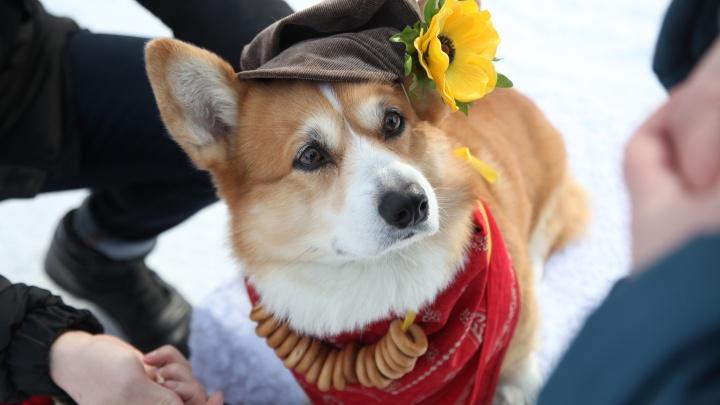 Хорошие мальчики: очень милые собаки заработали больше 100 тысяч для бездомных псов