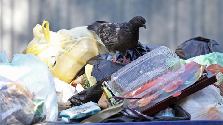 Челябинцев попросили сообщать о дворах, где плохо вывозят мусор