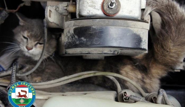 Ради спасения кота уфимец пожертвовал дорогой деталью в иномарке