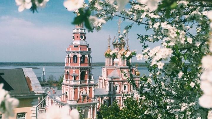 Фото дня: вишнёвые деревья цветут в Нижнем Новгороде