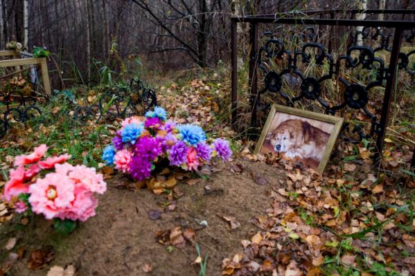 На могилах — цветы и фотографии питомцев