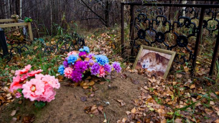 Ярославская прокуратура возбудила дело из-за незаконного кладбища домашних животных