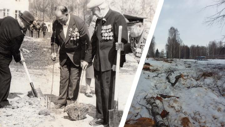 Жители российского села устроили чиновникам скандал из-за вырубки аллеи, посаженной ветеранами