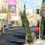 В мэрии утвердили места для продажи ёлок в Челябинске. Смотрим карту ёлочных базаров на 74.RU