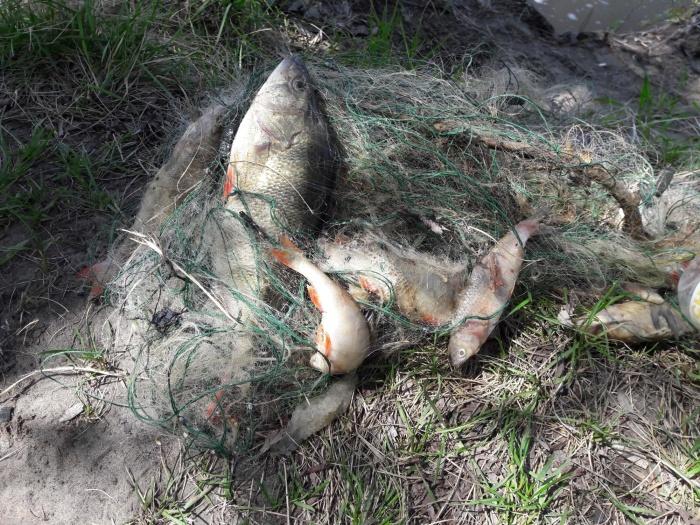 В ходе рейда участники очистили протоки Оби от губительных для рыбы сетей