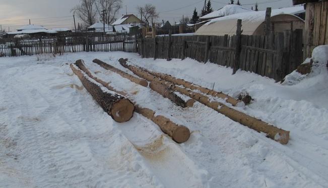 Жителя Кетовского района будут судить за рубку деревьев без разрешения