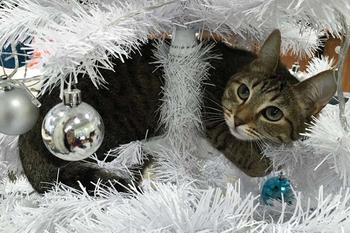 Ветеринары рекомендуют владельцам кошек не украшать ёлку дождиком и мишурой