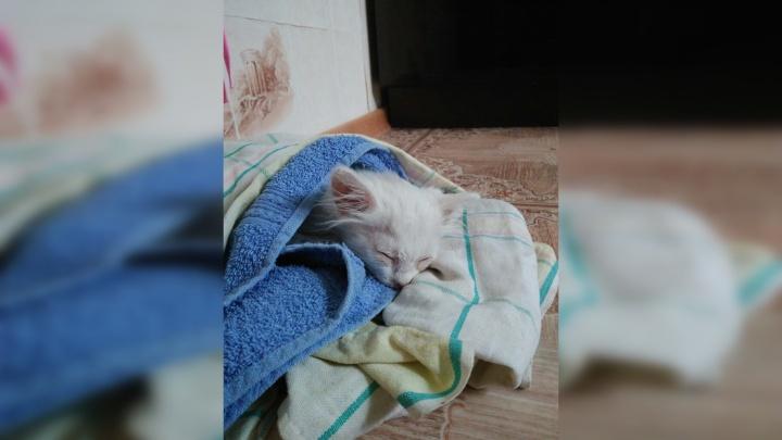 «Выманивали сосиской». Житель Кунгура три часа спасал котенка из двигателя автомобиля