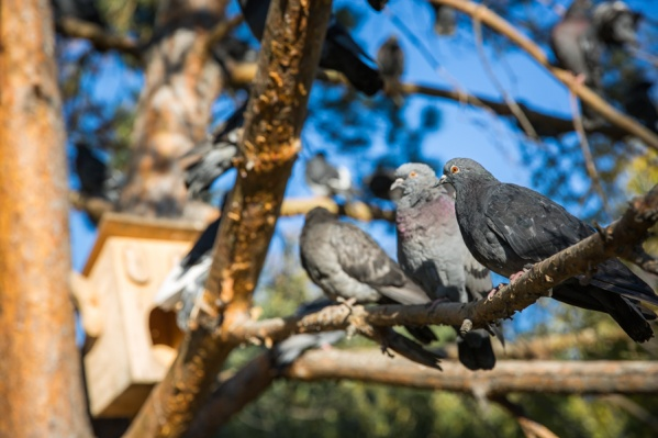 Неплательщик вышел на улицу покормить голубей и попался судебным приставам