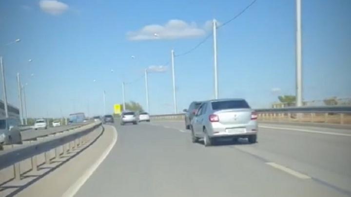 «Машины неслись мимо, она боялась пошевелиться»: водитель спас от смерти собаку на мосту через Волгу