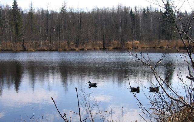 Сезон охоты в Зауралье стартует в конце апреля. Как получить охотничий билет?