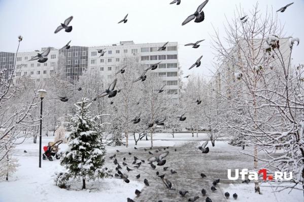 Небесная канцелярия решила побаловать жителей Башкирии тёплой зимней погодой