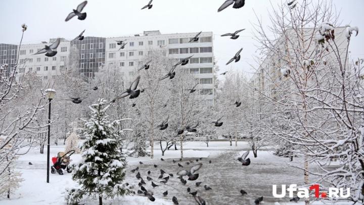 Какая погода ждёт жителей Башкирии в последнюю неделю декабря