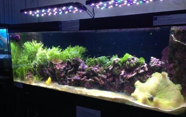 В Уфе могут закрыть океанариум