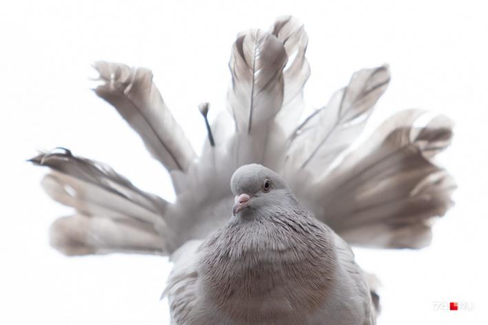 Эти птицы — эксклюзив