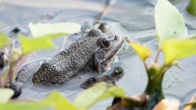 «Убивали чудищ по колено в воде»: волгоградцам открыли изумрудную тропу между трех озер