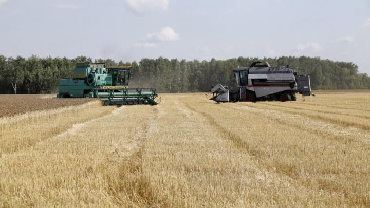 Для нового урожая в Зауралье закупили 2000 тонн удобрений