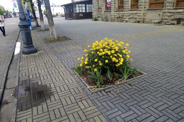 Когда липы на Кировке погибали, вместо них разбивали цветники