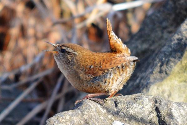 Маленькую птаху фотограф принял за обычную мышь