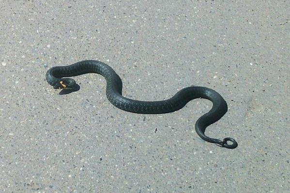 Змей видели в центре города