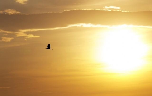 Экологический рейтинг: Башкирия заняла 59-е место из 85