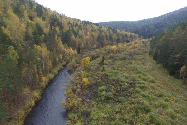 Компания обвиняемого заготавливала лес под Лесосибирском