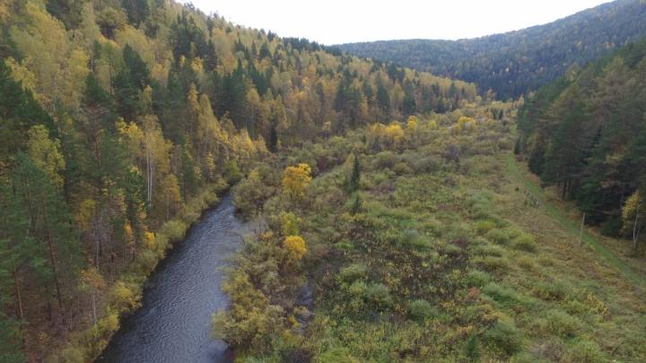 Коммерсант попал под суд за аферы с лесом на миллионы рублей в Лесосибирске