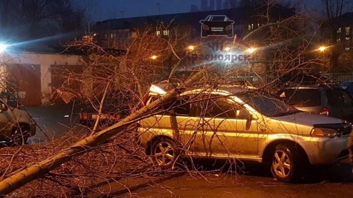 Шатаются светофоры и падают деревья: последствия сильного ветра в Красноярске