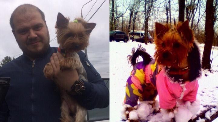 «Будем добиваться, чтобы животное усыпили»: в Ярославле пёс напал на женщину и загрыз собачку