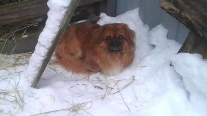 Испугались грохота: в Ярославле три пса потеряли хозяев после салюта