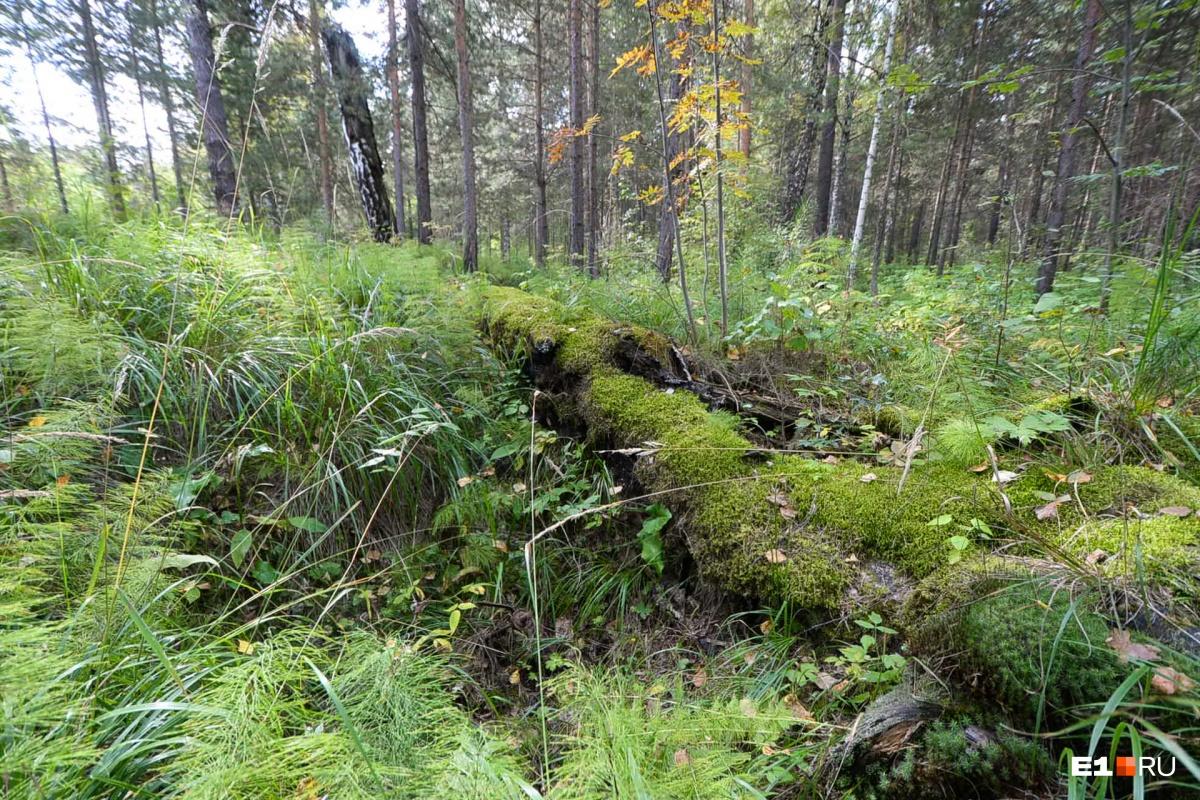 Рядом нетронутый лес