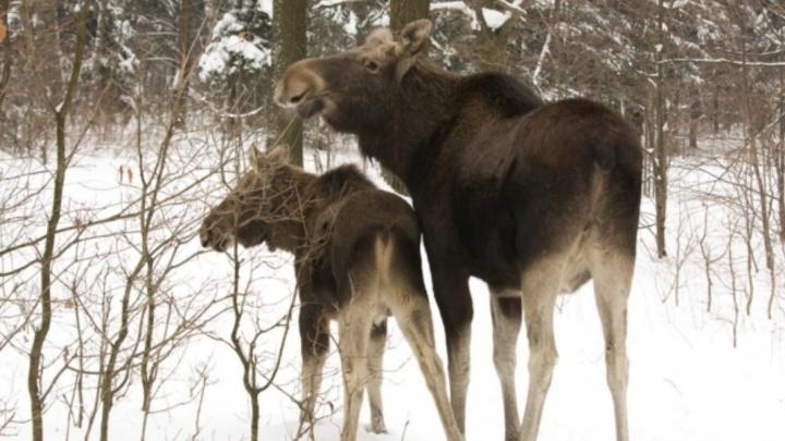 Нашли браконьера по пуле: на москвича завели уголовное дело за охоту в ярославских лесах