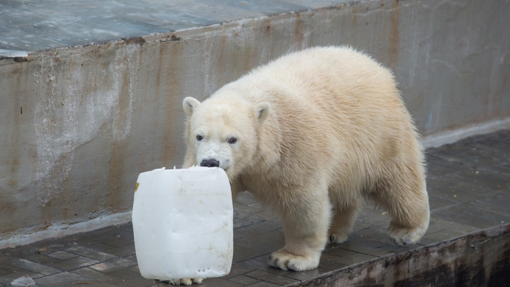 Зоопарк на диване: белые медведи и ягуары попали в 3D-тур в интернете