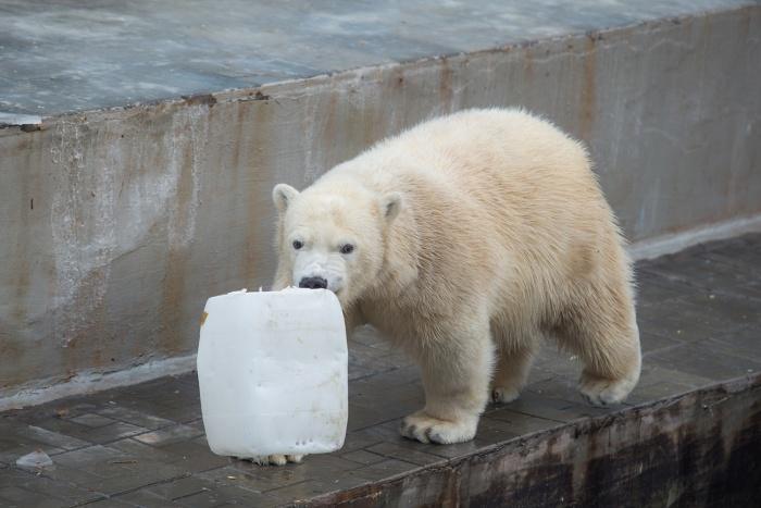 Белые медведи попали на снимки3D-тура по Новосибирскому зоопарку им. Р.А. Шило
