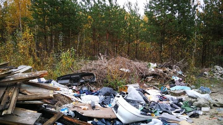 Благо устраиваем: боремся со стихийными свалками и провалами в Нижнем Новгороде