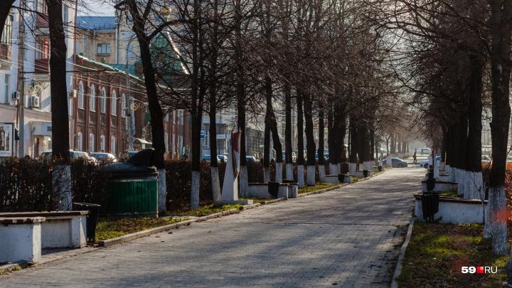 Пермские общественники выступили против вырубки деревьев на Комсомольском проспекте