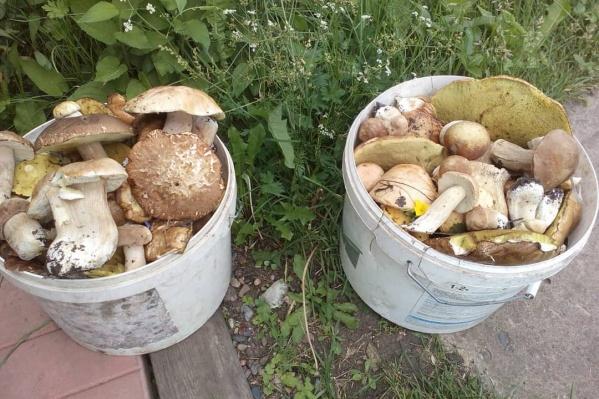 Такой урожай красноярцы собрали в окрестностях Сухобузимо