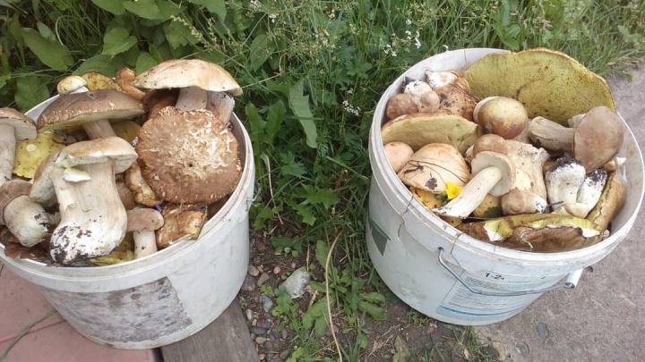 «Муж настругал целую корзину»: куда ехать за грибами под Красноярском и как избежать отравления