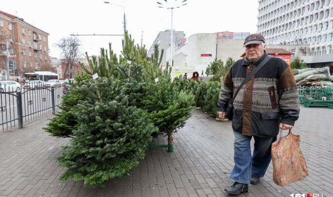Почем праздник? Ростовские власти рассказали, во сколько горожанам обойдутся сосны к Новому году