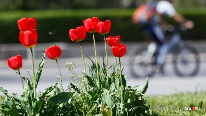 На старт, внимание, лето: в последние дни мая Волгоград раскалится до +35 градусов