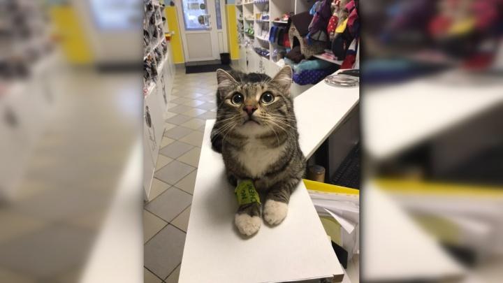 «Послушный и обаятельный». В Перми ищут хозяина коту, которого спасли из дома с разлитой ртутью