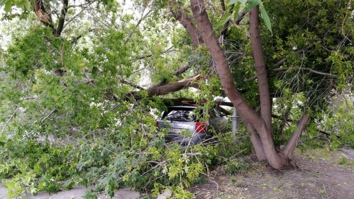 Дерево упало на «Тойоту» в центре Новосибирска — машина оказалась в ловушке