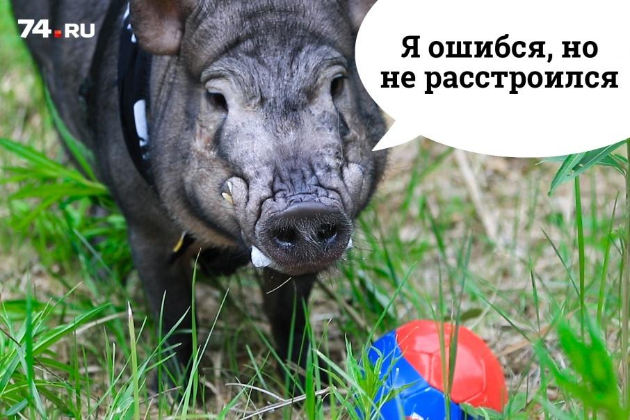 Борис готов признать ошибку с лёгким сердцем: россияне обеспечили себе участие в плей-офф